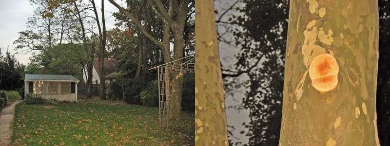 Backyard Tree Branch Cut