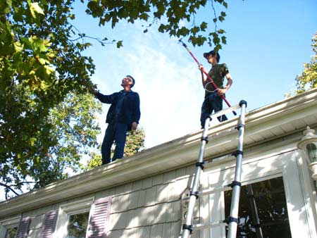 Tree pruning from the roof