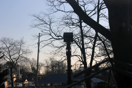 Crane in the Back Yard