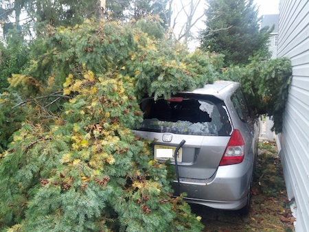 Hurricane Sandy Tree on Car