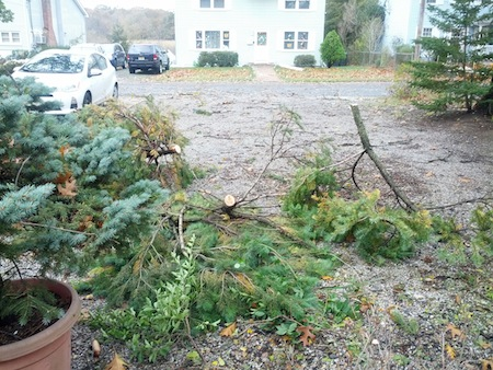 Hurricane Sandy Tree Debris