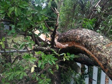Broken Tree after Hurricane Sandy
