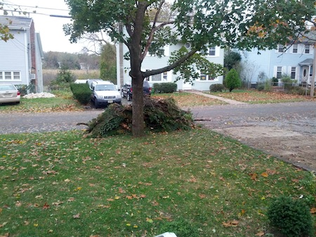 Hurricane Sandy Yard Cleanup