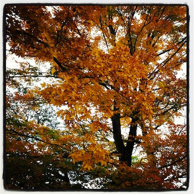 Autumn, Palisades Parkway, NJ